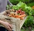 Aprenda a fazer uma horta orgânica em casa ou apartamento