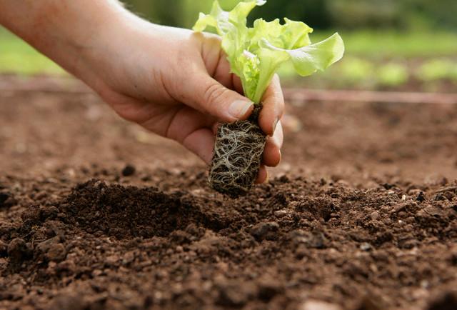 Estações de Plantio de verduras e legumes