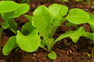 verduras-dicasdevida