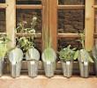 Plante suas próprias ervas