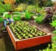 Como iniciar uma horta