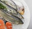 Peixes que você deve evitar de comer (e por quê)