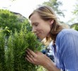 Como plantar e cultivar alecrim em casa
